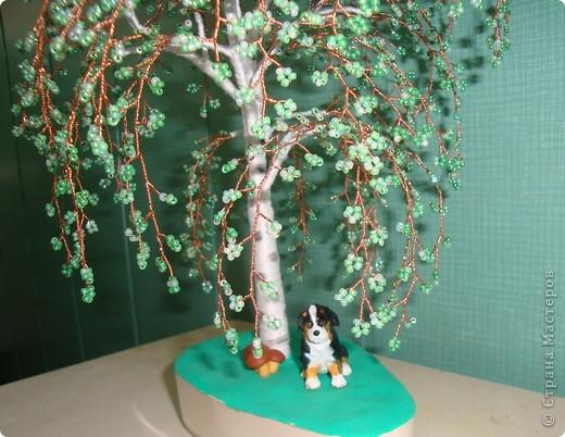 Первое дерево. фото 3