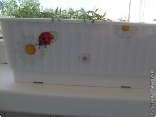 Моя полянка(целиком) фото 3