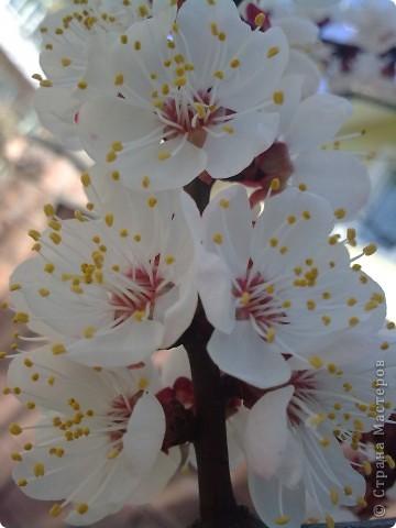 Захотелось поближе рассмотреть цветы. Вот они какие вблизи. фото 9
