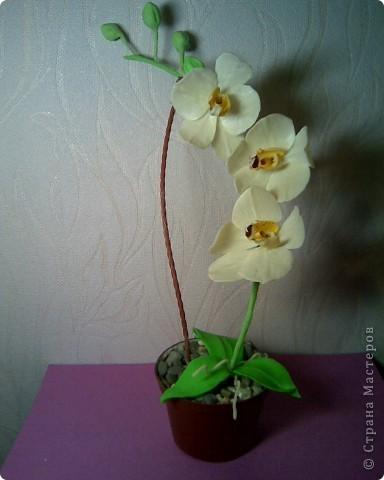 """А я все орхидеями """"мучаюсь"""",пока терплю поражение,но не сдаюсь)))"""