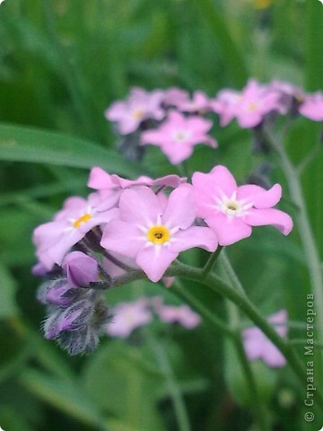 Захотелось поближе рассмотреть цветы. Вот они какие вблизи. фото 5