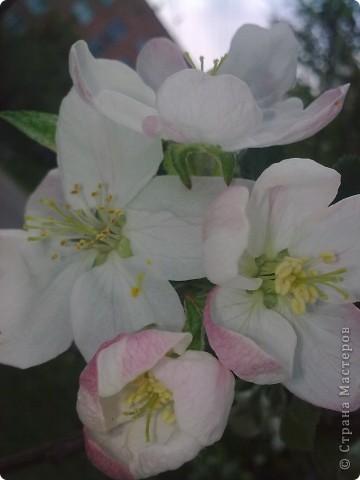 Захотелось поближе рассмотреть цветы. Вот они какие вблизи. фото 8