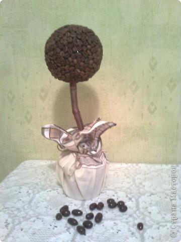 Это мое первое кофейное дерево! На этой фотографии еще не нанесен последний штрих - керамзит в горшочек, залитый клеем солид фото 2