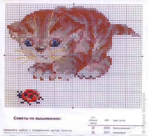 Представленные здесь схемы- из наборов для вышивания: шкодливый кот фото 2