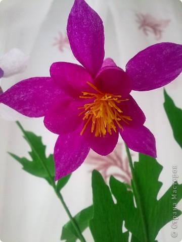 На создание этих цветов меня подтолкнула Юлия П_и_Л. Спасибо, Юлия!!!Цветочек дался не сразу, а только с третьей попытки.И сейчас он далек от идеала. Вот сделала, а в голове еще один вариант родился, как сделать цветочек водосбора более похожим! фото 3