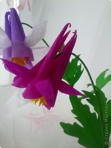 На создание этих цветов меня подтолкнула Юлия П_и_Л. Спасибо, Юлия!!!Цветочек дался не сразу, а только с третьей попытки.И сейчас он далек от идеала. Вот сделала, а в голове еще один вариант родился, как сделать цветочек водосбора более похожим! фото 4