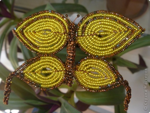 Бабочка Красавица фото 1