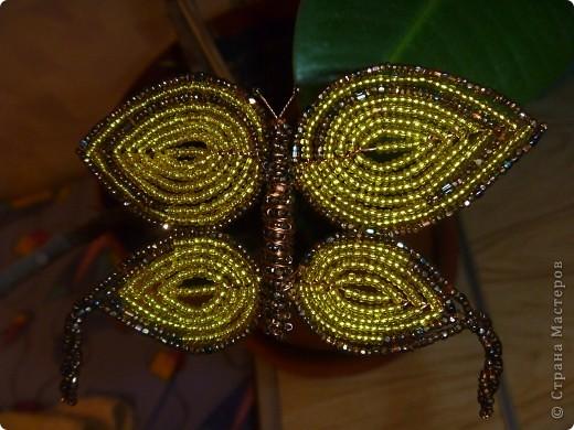 Бабочка Красавица фото 2