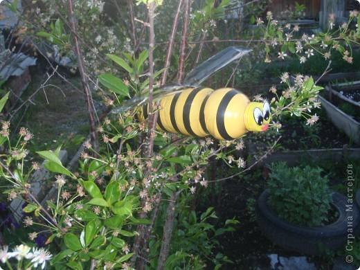 К нав сад прилетели пчелки. Сделаны из пластиковой бутылки, покрашены масляной краской, полоски- черная изолента, крылья- белая пластиковая бутылка, прожилки на крыльях - лак для ногтей черного цвета. фото 2
