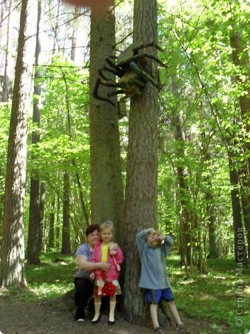 Изучаем карту леса...Куда? фото 5