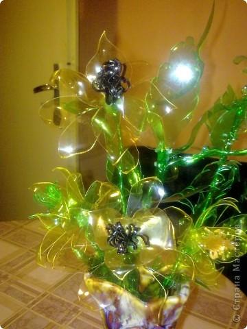 Мои цветьi из пластиковьi бутьiлку фото 1