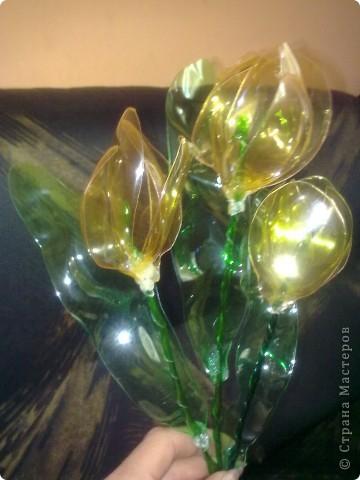 Мои цветьi из пластиковьi бутьiлку фото 6