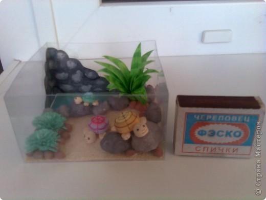 Захотелось мне черепаху, а вот купить никак не получается. Ну, не проблема - я завела целое черепашье семейство, создав для них вольготные условия. фото 3