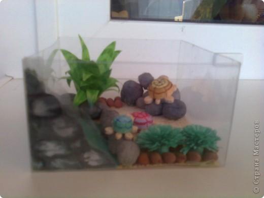 Захотелось мне черепаху, а вот купить никак не получается. Ну, не проблема - я завела целое черепашье семейство, создав для них вольготные условия. фото 5