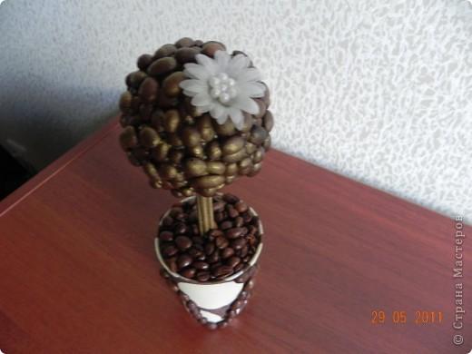 Наконец-то и я вырастила кофейное дерево. фото 4