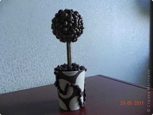 Наконец-то и я вырастила кофейное дерево. фото 5