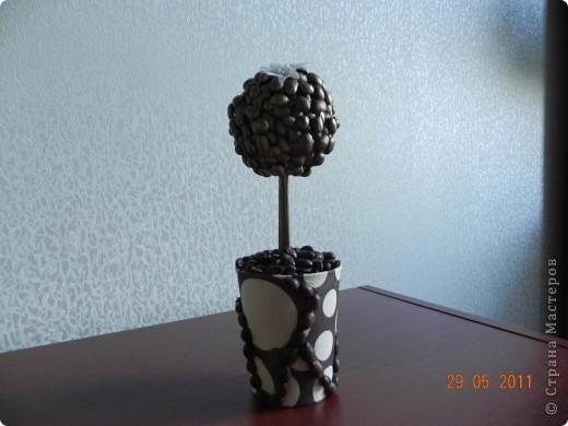 Наконец-то и я вырастила кофейное дерево. фото 6