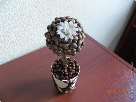 Наконец-то и я вырастила кофейное дерево. фото 1