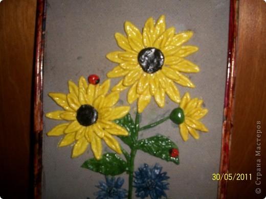 подсолнухи,которыми я горжусь фото 2