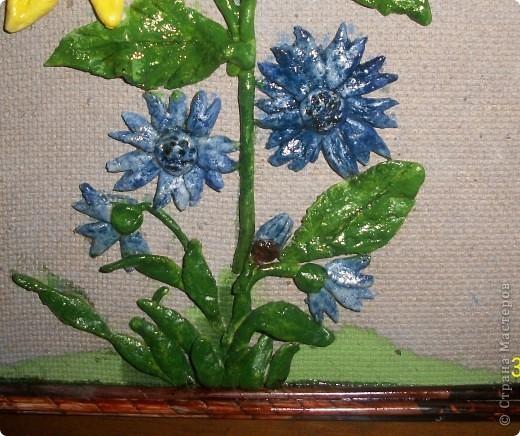 подсолнухи,которыми я горжусь фото 3