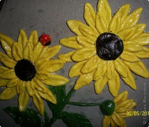 подсолнухи,которыми я горжусь фото 4