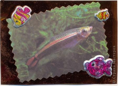 """""""Мир аквариума"""" фото 2"""