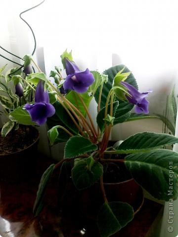 Мой любимый цветочек... фото 2