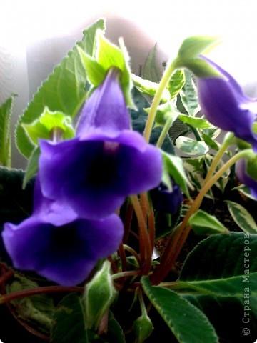 Мой любимый цветочек... фото 1