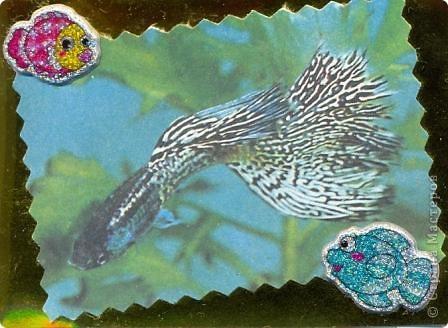 """""""Мир аквариума"""" фото 3"""