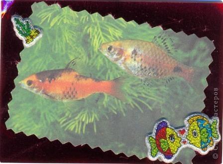 """""""Мир аквариума"""" фото 8"""