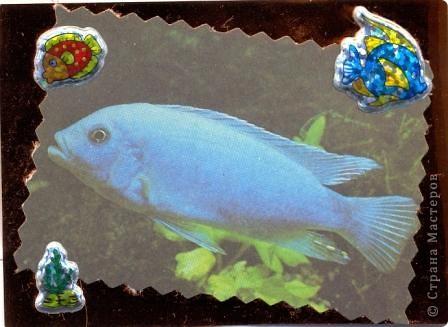 """""""Мир аквариума"""" фото 9"""