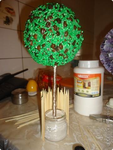 топиарий Кофейное дерево фото 8