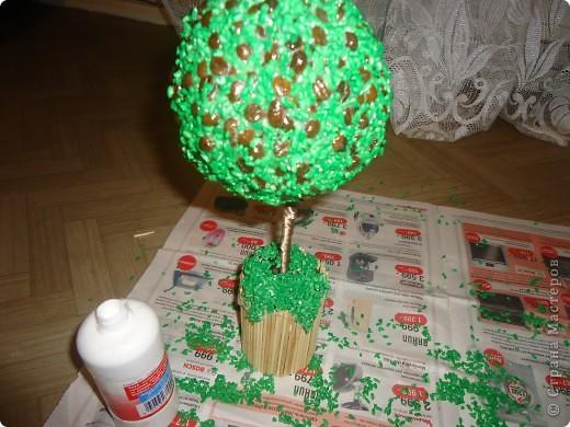 топиарий Кофейное дерево фото 9