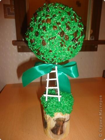 топиарий Кофейное дерево фото 1