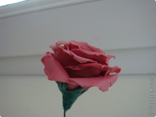 Я  решила попробовать слепить розу без специальных инструментов, которыми пользуются в технике ХВ и слепила из обычного пластелина.Лепестки разминала пальцами . Вот что получилось Мне очень нравятся работы мастериц сделанные из холодного фарфора. Хочу научиться лепить, но уже из настоящего ХВ. фото 3