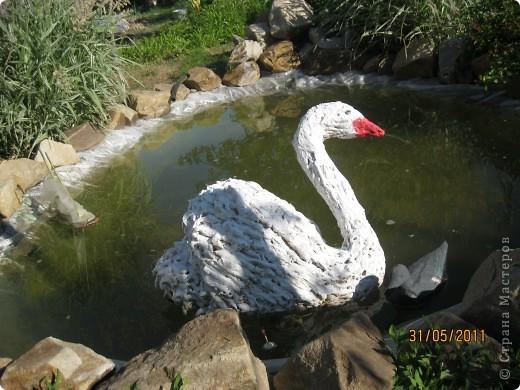 Мой лебедь