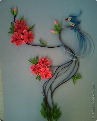 райская птичка на ветке сакуры