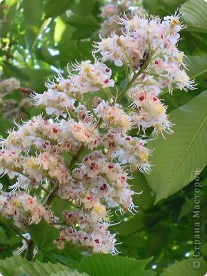 Чтобы и в душе цвели цветы и летали бабочки! фото 2