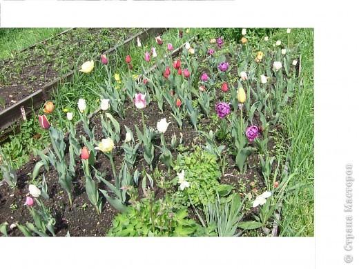 те же цветы....но уже в букетах ....утром дома........два простых ..........не шикарных.........и даже не средних букетика........срезаны......плохо это или хорошо.........кому плохо..........кому хорошо.........в чем истина...........опять игра......игра слов........кто-то любуется ....или кем-то любуются......ИГРА ЖИЗНИ..................продолжается фото 41