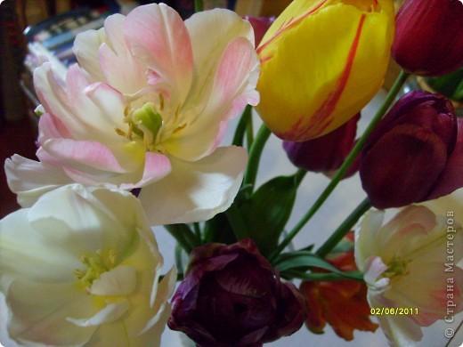 те же цветы....но уже в букетах ....утром дома........два простых ..........не шикарных.........и даже не средних букетика........срезаны......плохо это или хорошо.........кому плохо..........кому хорошо.........в чем истина...........опять игра......игра слов........кто-то любуется ....или кем-то любуются......ИГРА ЖИЗНИ..................продолжается фото 10