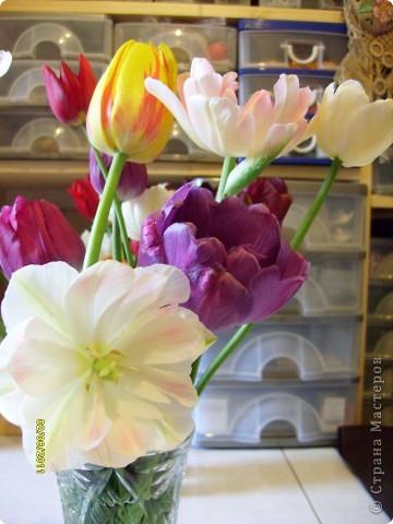 те же цветы....но уже в букетах ....утром дома........два простых ..........не шикарных.........и даже не средних букетика........срезаны......плохо это или хорошо.........кому плохо..........кому хорошо.........в чем истина...........опять игра......игра слов........кто-то любуется ....или кем-то любуются......ИГРА ЖИЗНИ..................продолжается фото 11