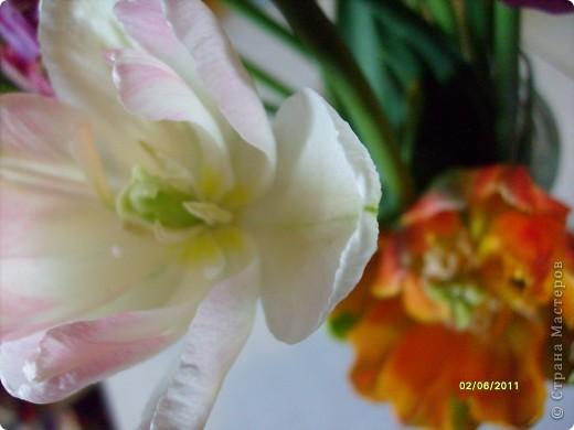 те же цветы....но уже в букетах ....утром дома........два простых ..........не шикарных.........и даже не средних букетика........срезаны......плохо это или хорошо.........кому плохо..........кому хорошо.........в чем истина...........опять игра......игра слов........кто-то любуется ....или кем-то любуются......ИГРА ЖИЗНИ..................продолжается фото 12