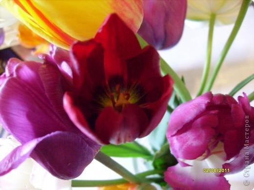 те же цветы....но уже в букетах ....утром дома........два простых ..........не шикарных.........и даже не средних букетика........срезаны......плохо это или хорошо.........кому плохо..........кому хорошо.........в чем истина...........опять игра......игра слов........кто-то любуется ....или кем-то любуются......ИГРА ЖИЗНИ..................продолжается фото 13