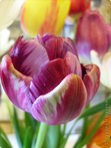 те же цветы....но уже в букетах ....утром дома........два простых ..........не шикарных.........и даже не средних букетика........срезаны......плохо это или хорошо.........кому плохо..........кому хорошо.........в чем истина...........опять игра......игра слов........кто-то любуется ....или кем-то любуются......ИГРА ЖИЗНИ..................продолжается фото 14