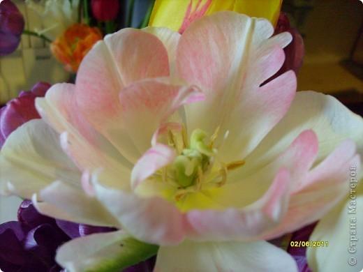 те же цветы....но уже в букетах ....утром дома........два простых ..........не шикарных.........и даже не средних букетика........срезаны......плохо это или хорошо.........кому плохо..........кому хорошо.........в чем истина...........опять игра......игра слов........кто-то любуется ....или кем-то любуются......ИГРА ЖИЗНИ..................продолжается фото 15