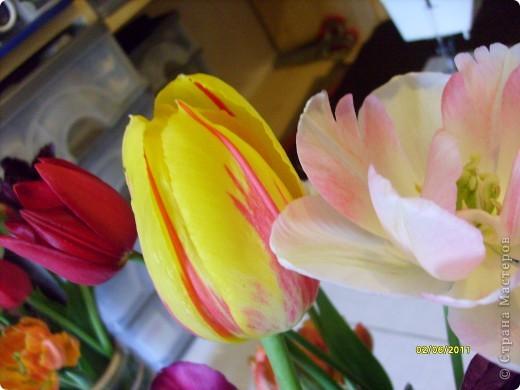 те же цветы....но уже в букетах ....утром дома........два простых ..........не шикарных.........и даже не средних букетика........срезаны......плохо это или хорошо.........кому плохо..........кому хорошо.........в чем истина...........опять игра......игра слов........кто-то любуется ....или кем-то любуются......ИГРА ЖИЗНИ..................продолжается фото 16