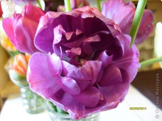 те же цветы....но уже в букетах ....утром дома........два простых ..........не шикарных.........и даже не средних букетика........срезаны......плохо это или хорошо.........кому плохо..........кому хорошо.........в чем истина...........опять игра......игра слов........кто-то любуется ....или кем-то любуются......ИГРА ЖИЗНИ..................продолжается фото 17