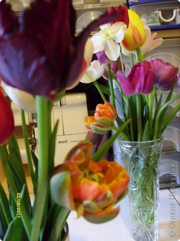 те же цветы....но уже в букетах ....утром дома........два простых ..........не шикарных.........и даже не средних букетика........срезаны......плохо это или хорошо.........кому плохо..........кому хорошо.........в чем истина...........опять игра......игра слов........кто-то любуется ....или кем-то любуются......ИГРА ЖИЗНИ..................продолжается фото 2