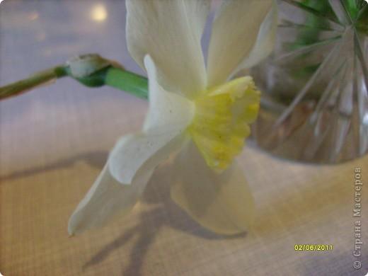 те же цветы....но уже в букетах ....утром дома........два простых ..........не шикарных.........и даже не средних букетика........срезаны......плохо это или хорошо.........кому плохо..........кому хорошо.........в чем истина...........опять игра......игра слов........кто-то любуется ....или кем-то любуются......ИГРА ЖИЗНИ..................продолжается фото 18
