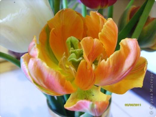 те же цветы....но уже в букетах ....утром дома........два простых ..........не шикарных.........и даже не средних букетика........срезаны......плохо это или хорошо.........кому плохо..........кому хорошо.........в чем истина...........опять игра......игра слов........кто-то любуется ....или кем-то любуются......ИГРА ЖИЗНИ..................продолжается фото 19
